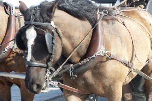 horse-2593217_1920